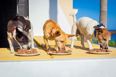 Three dogs eat wet dog food off white plates on the patio of a beach villa.